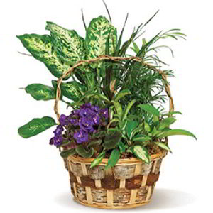 Morristown Florist | Pretty Basket
